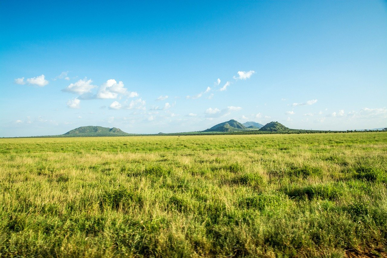 Photo of a Steppe - What is a Steppe?